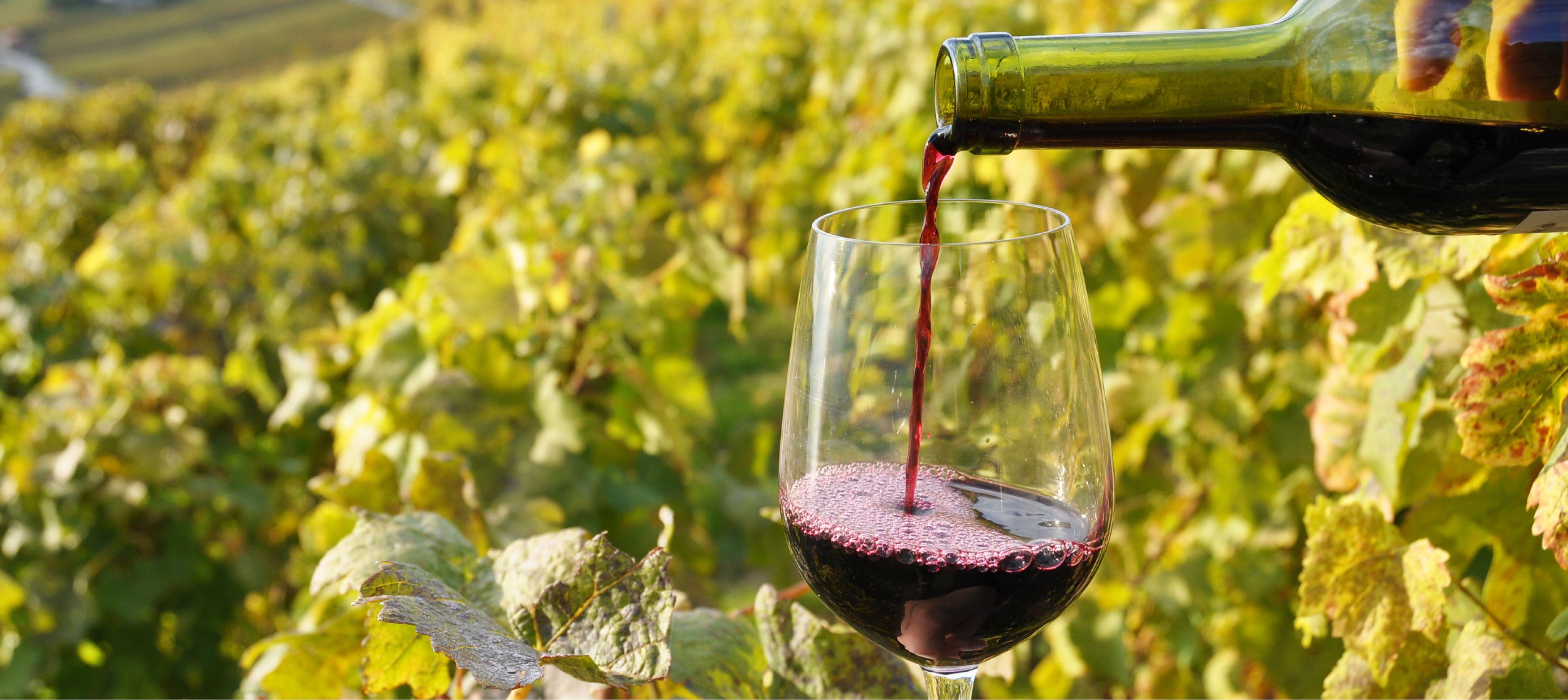 hälla upp portvin i ett glas vid en vinodling i portugal