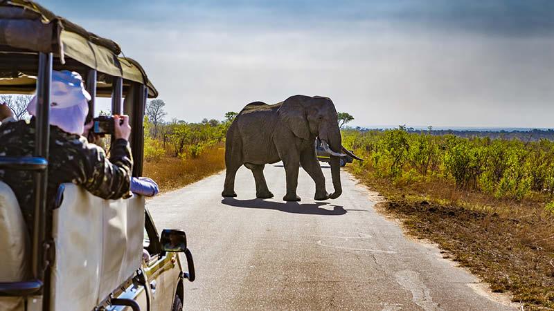 Safariäventyr i Sydafrika