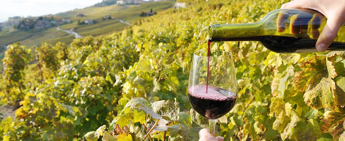 Portvin vid vingård i Douro, Portugal