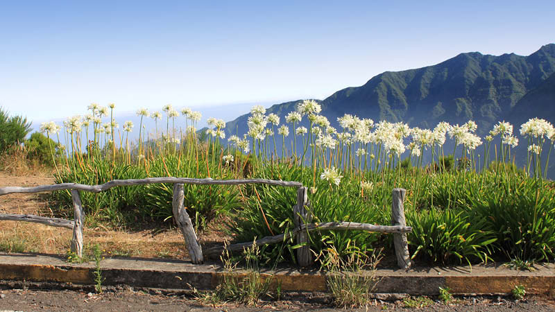 Blommor och gräs med bergen som bakgrund på Madeira, Portugal.