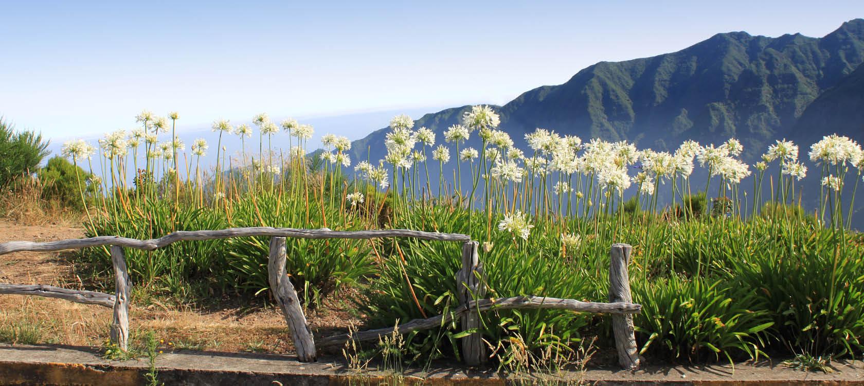 Blommor och berg på Madeira.