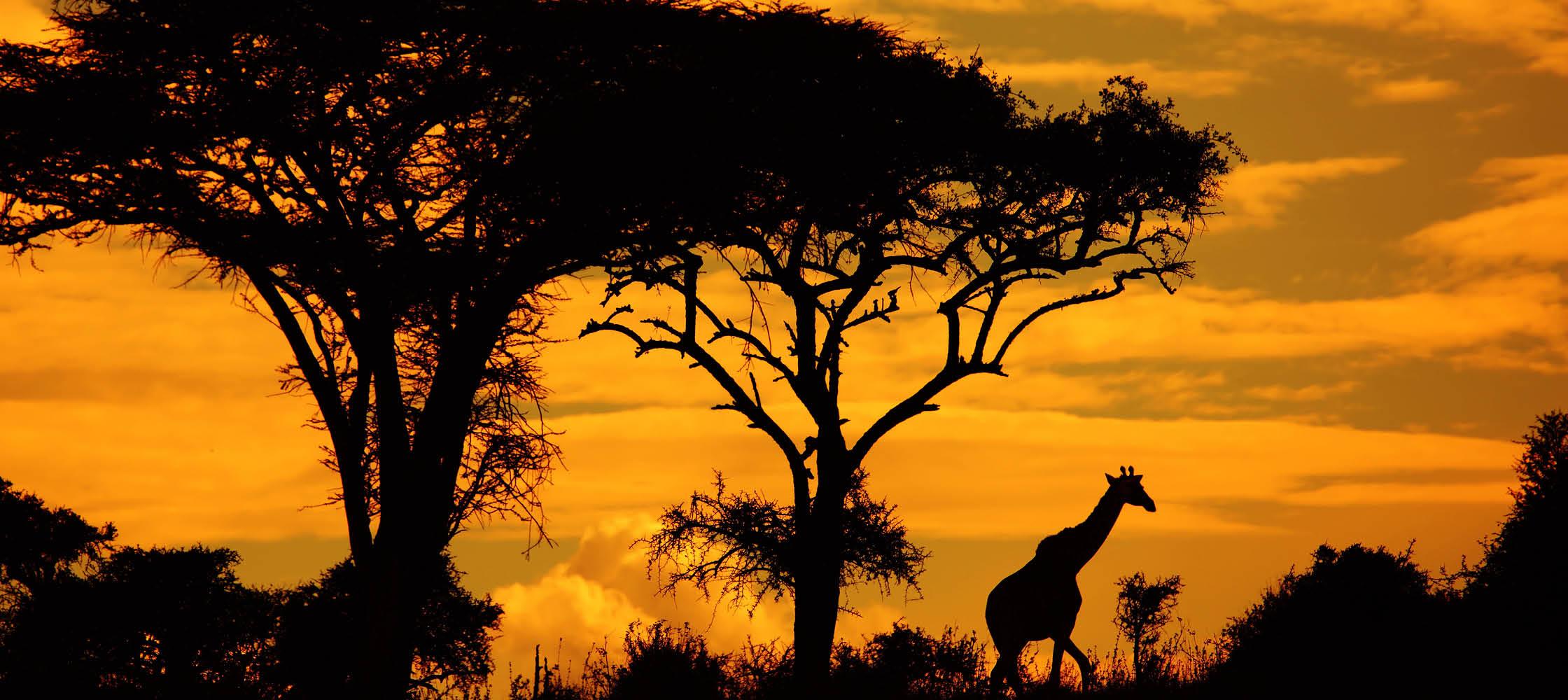 vilda djur på savannen i sydafrika