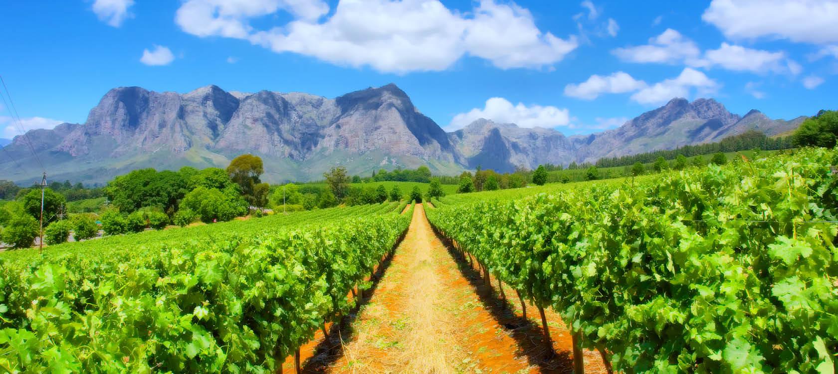 gröna odlingar med bergen i bakgrunden på resa till sydafrika
