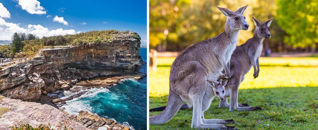Tha Gap i Sydney och kängurur