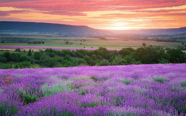 Vägen till Provence
