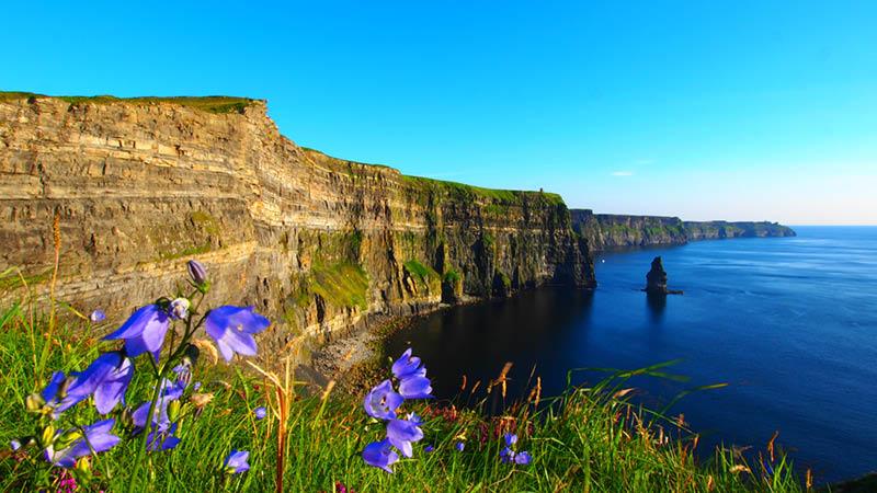 Blommor och vackert landskap på en rundresa på Irland