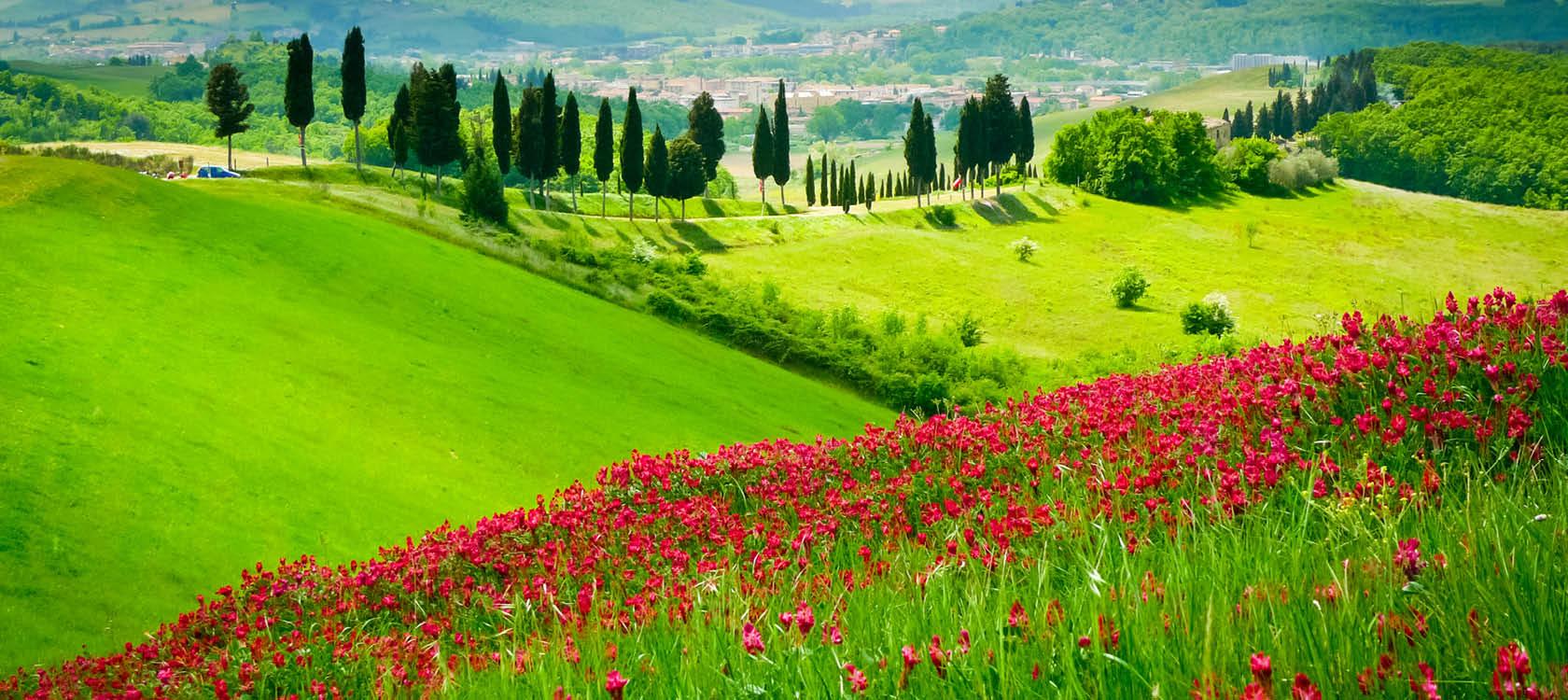 gröna ängar och blomfält med cypresser i toscana