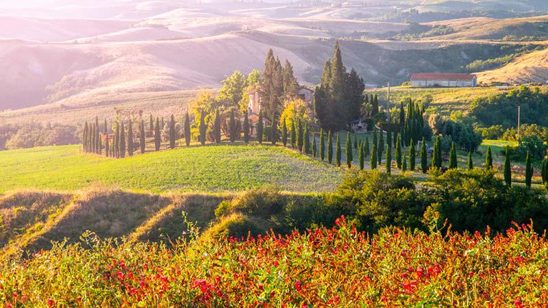 Landskap i Toscana Italien, med cypresser och vallmo i solnedgången.
