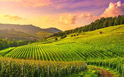 Vin och gastronomi i Piemonte