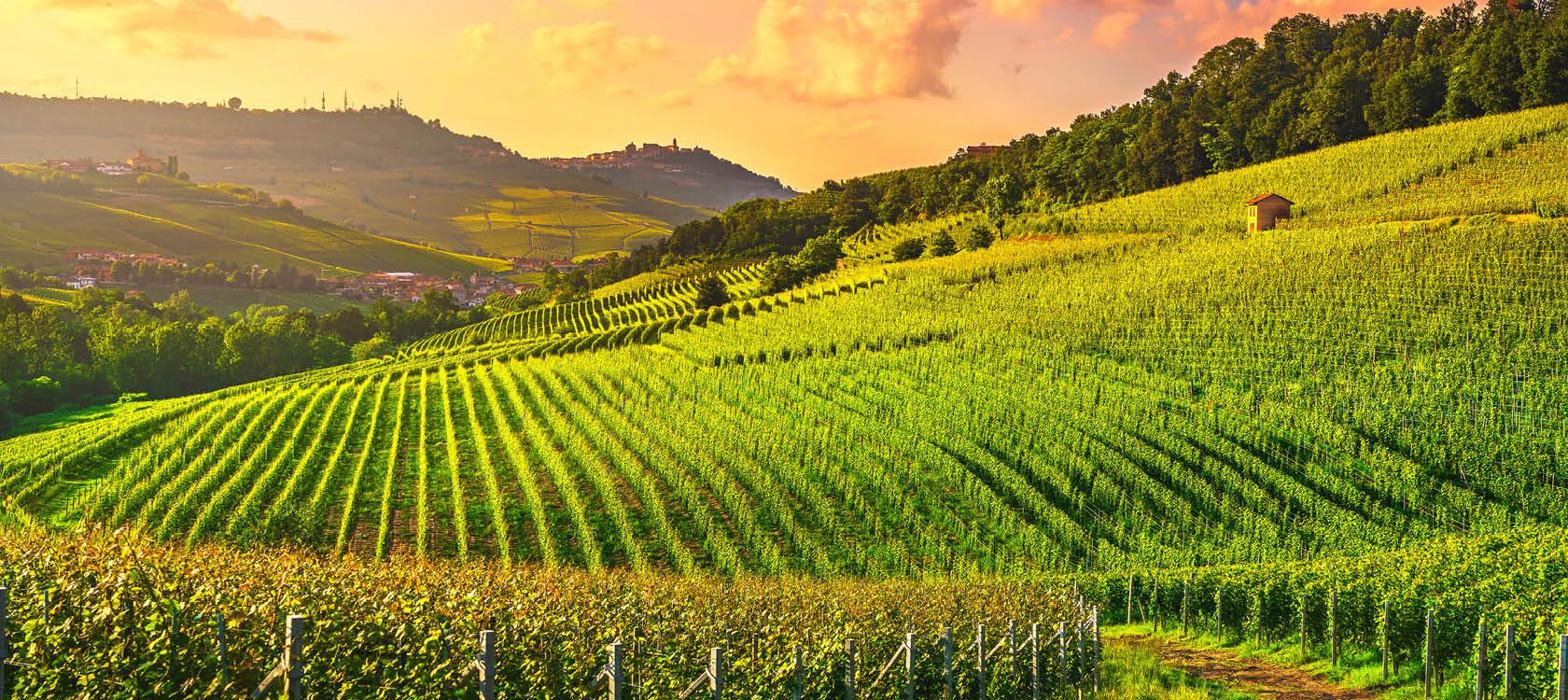 Vinodlingar i Piemonte