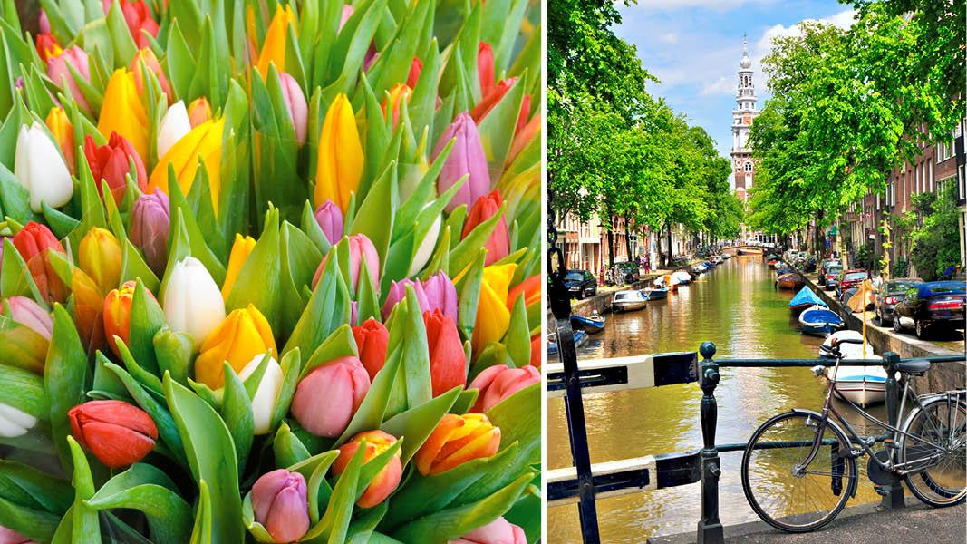 Tulpaner i alla dess färger och kanalernas Amsterdam.