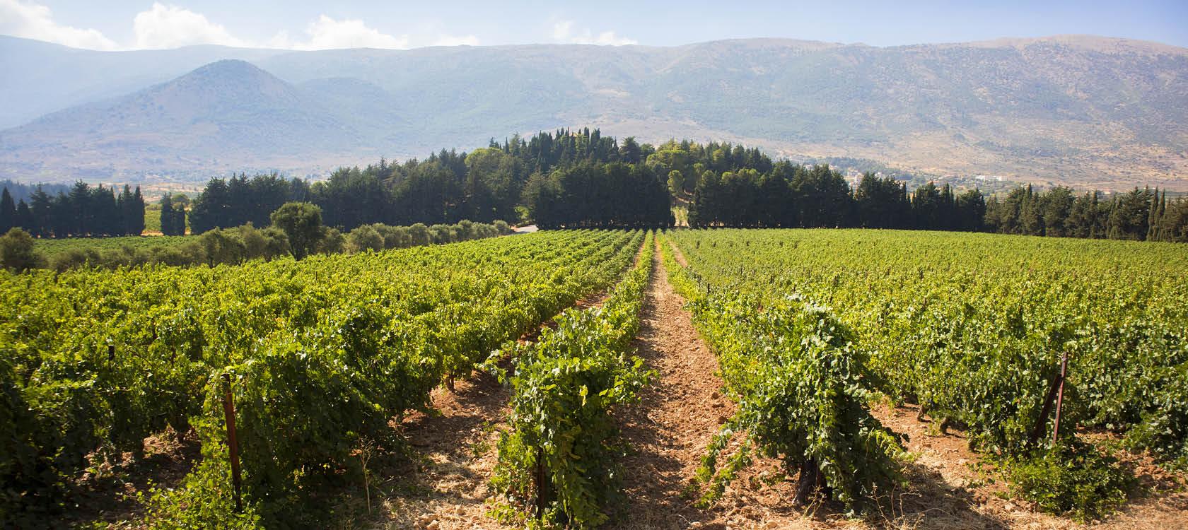 Gr�na vinmarker i Libanon.