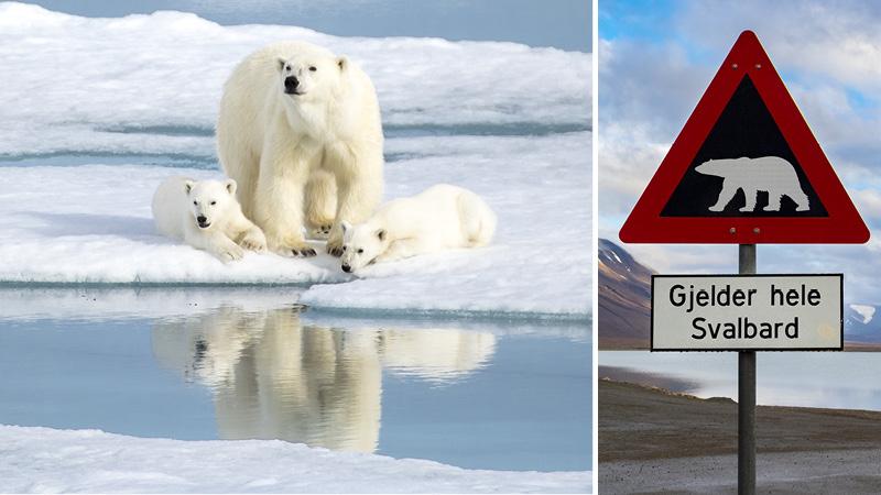 Isbjörnar och en sjö bland bergen på Svalbard.
