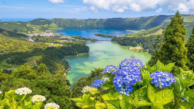 Hortensior vid tvillingsjöarna på Azorerna.