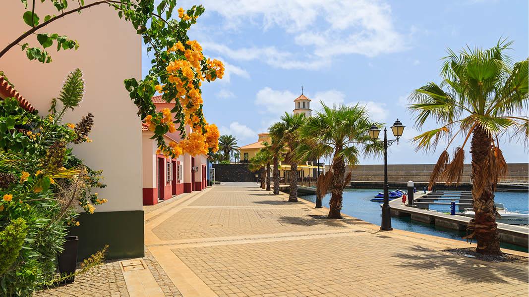 vackra palmer och promenadstråk längs hamnen i funchal
