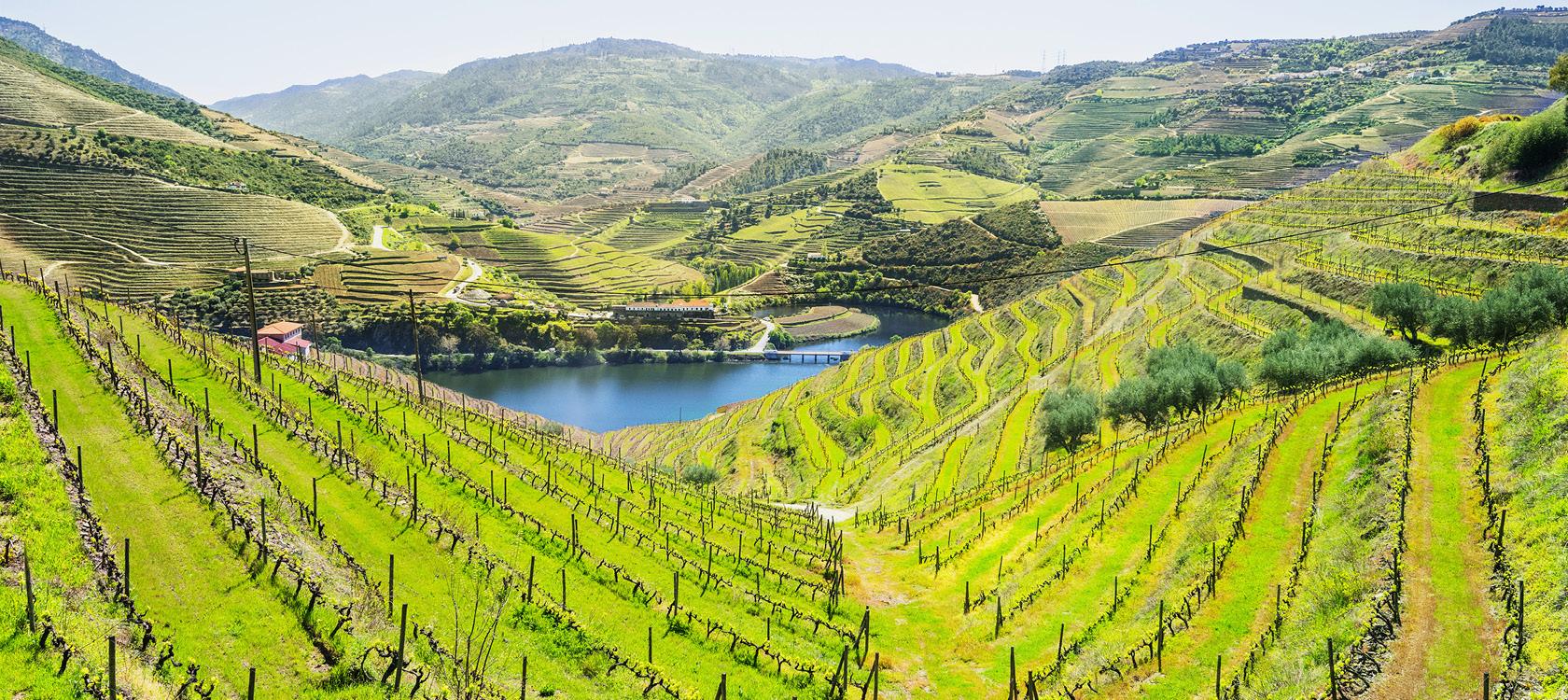 Vinodlingar på sluttningarna i den frodiga Dourodalen i Portugal.