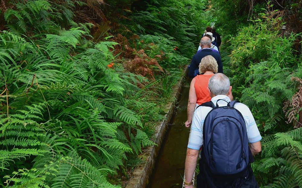 Blomstrande vandringar på Madeira