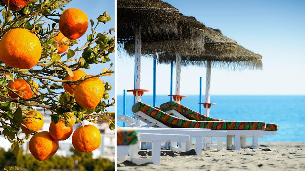Apelsinträd och solstolar vid stranden på en långtidssemester i Andalusien.
