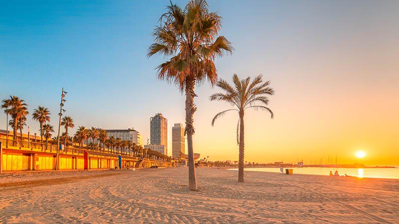 solnedgång utanför sandstrand med gröna palmer på resa i barcelona